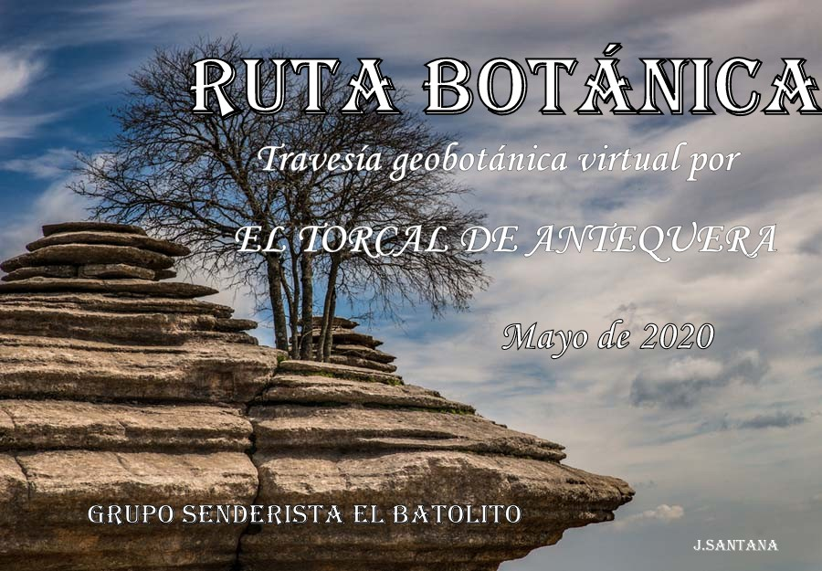 Cartel XIV Ruta Botánica Virtual